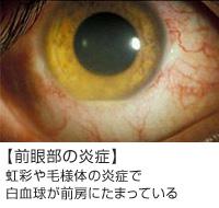 jpg (1)